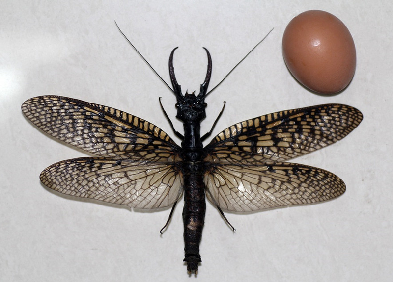 Illustration for article titled World's Largest Aquatic Insect Found In China