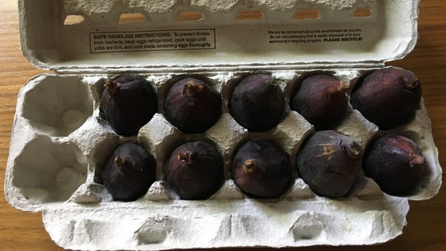 How to Store Fresh Figs So They Really Last