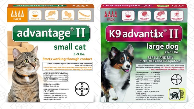 Advantage Coupons For Cats Simply Be Coupon Code 2018