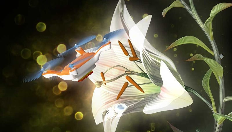 Image; Eijiro Miyako