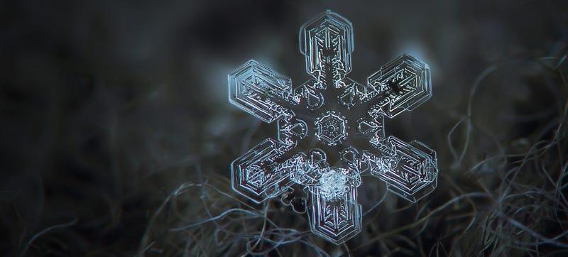 The snowflakes