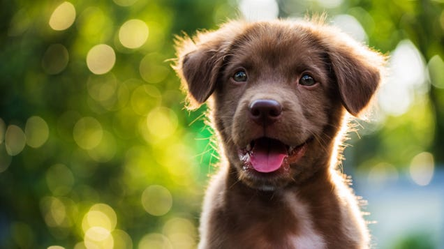How to Take the Classy Portraits Your Pet Deservesd