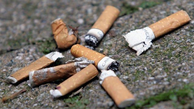 Cigarette Butts Stunt Plants' Growth