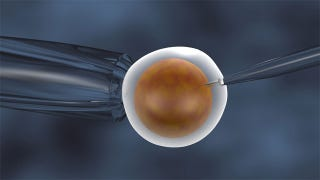 Illustration for article titled Creepy In-Vitro fertilization Could Use Eggs From a Dead Teenager