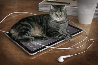 Illustration for article titled Last Chance for Apple Tablet Rumors