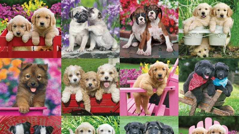 Also up for grabs, a 500-piece puppy puzzle. (Photo: Amazon)