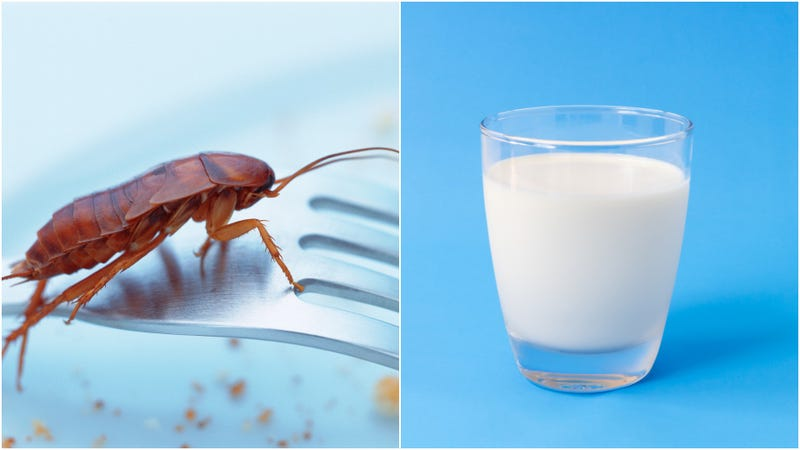 Illustration for article titled Why is cockroach milk trending and will it save us all?