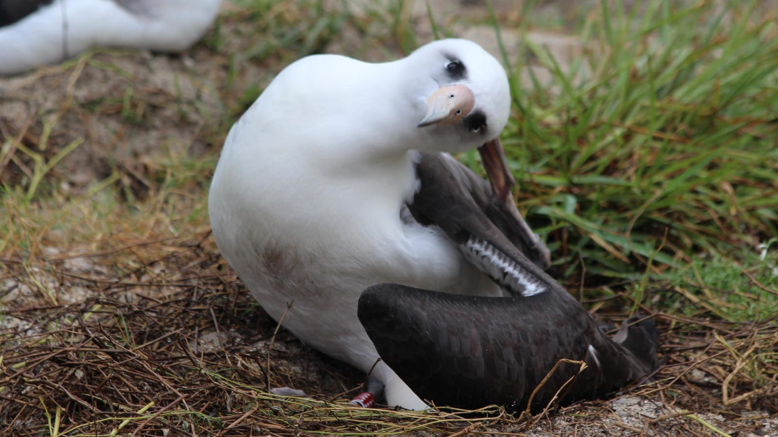 World's Oldest Wild Bird Just Laid Another Dang Egg