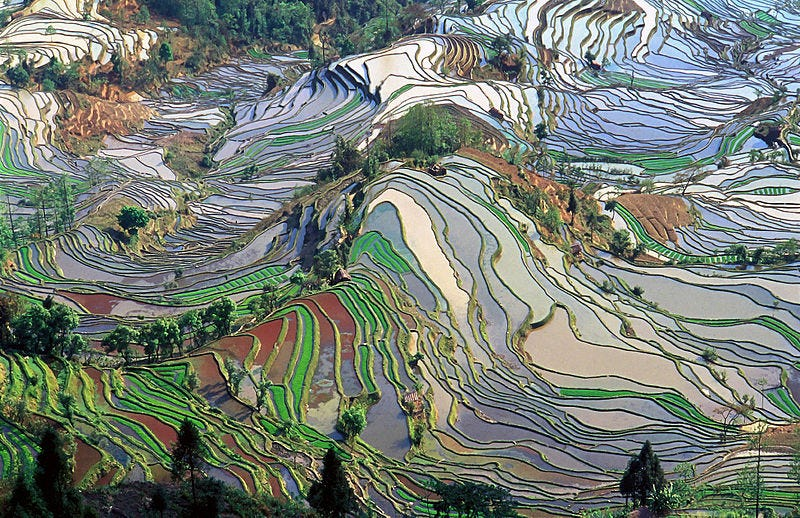 Illustration for article titled This Gorgeous Stained Glass Landscape Is Actually a Rice Field
