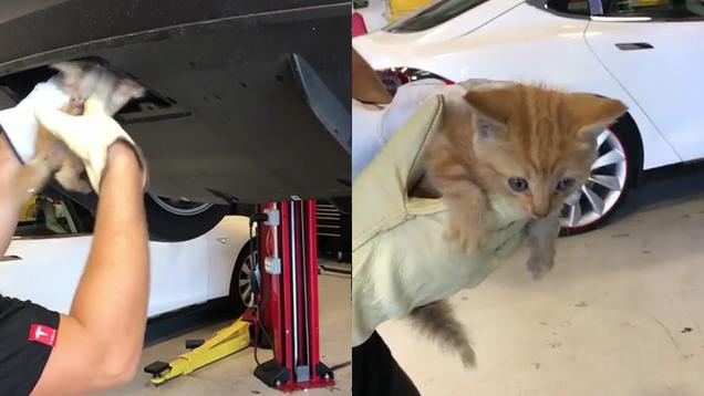 Adorable Kitten Mysteriously Appears Inside Tesla Bumper