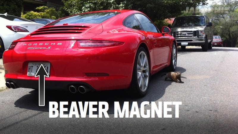 Illustration for article titled The New Porsche 911 Is A Beaver Magnet