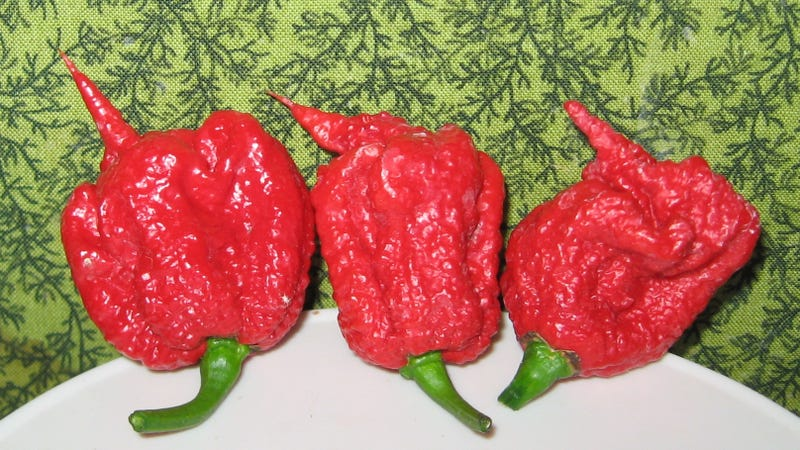 The Carolina Reaper, recognized as the world's hottest pepper.