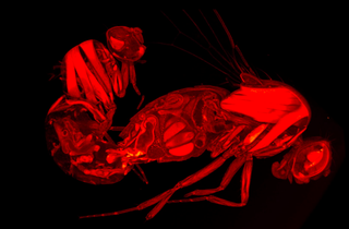 Illustration for article titled 3D Scans Show How Semen Controls Sexual Behavior in Female Flies