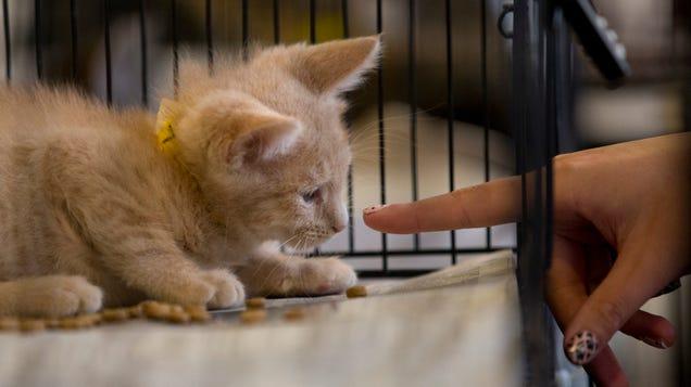 USDA Says It Will Stop Killing Cats