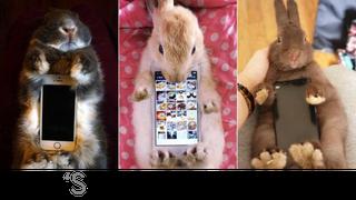 Illustration for article titled Kotaku 'Shop Contest: Better Than A Bunny Smartphone Case
