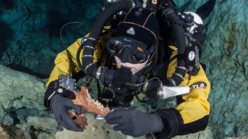 Diver holding jaw and vertebra of Protocyon, a wolf-like creature.