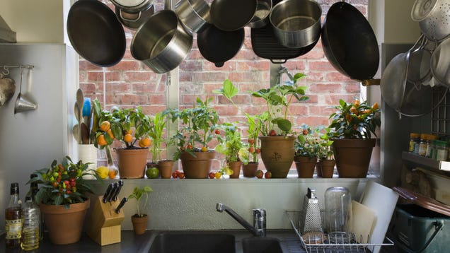 How to Pick a Houseplant That Will Survive in Your Kitchen