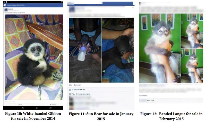 Illustration for article titled Jerks Are Selling Endangered Species on Facebook