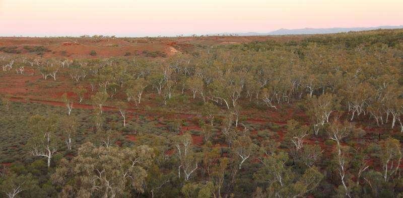 """Uno de los bosques """"encontrados"""" en Australia. TERN Ausplots"""