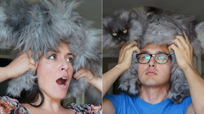 Illustration for article titled Are Cat Hairdos the New Cat Bearding?
