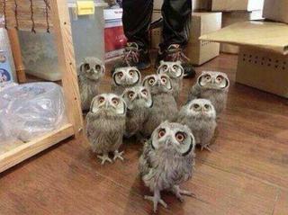 Illustration for article titled Owls!