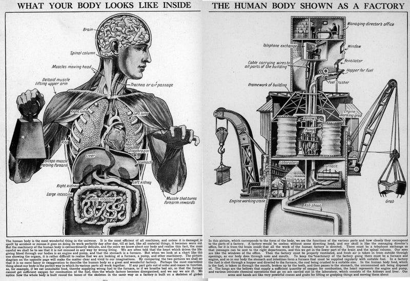 Illustration for article titled Your Body, the Machine... Literally