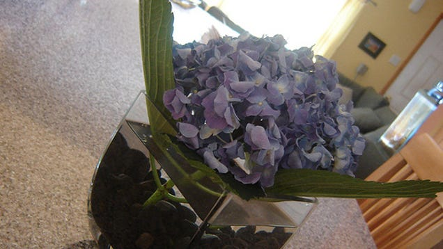 Keep Fresh Flowers Lasting Longer With Crushed Aspirin