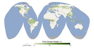 Illustration for article titled The height of the world's forests in map form