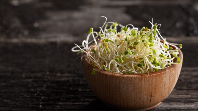You Should Probably Never Eat Sprouts