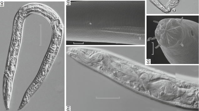 Russian Scientists Claim to Have Resurrected 40,000-Year-Old Worms Buried in Ice