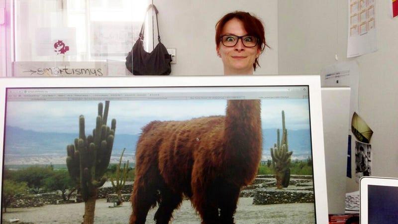 Illustration for article titled El safari de escritorio hace furor en bromas de oficina