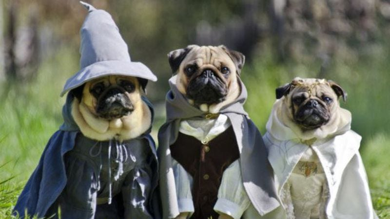 Illustration for article titled California couple dresses their pugs as Lord Of The Rings characters, because why not?