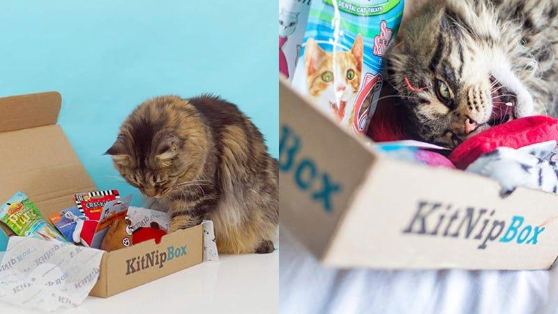 50% Off Your First KitNipBox   $10   Amazon50% Off Your First Multi-Cat KitNipBox   $15   Amazon
