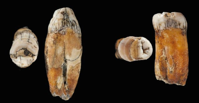 More Evidence That Neanderthals Were 'Absorbed' by Humans, Not Wiped Out