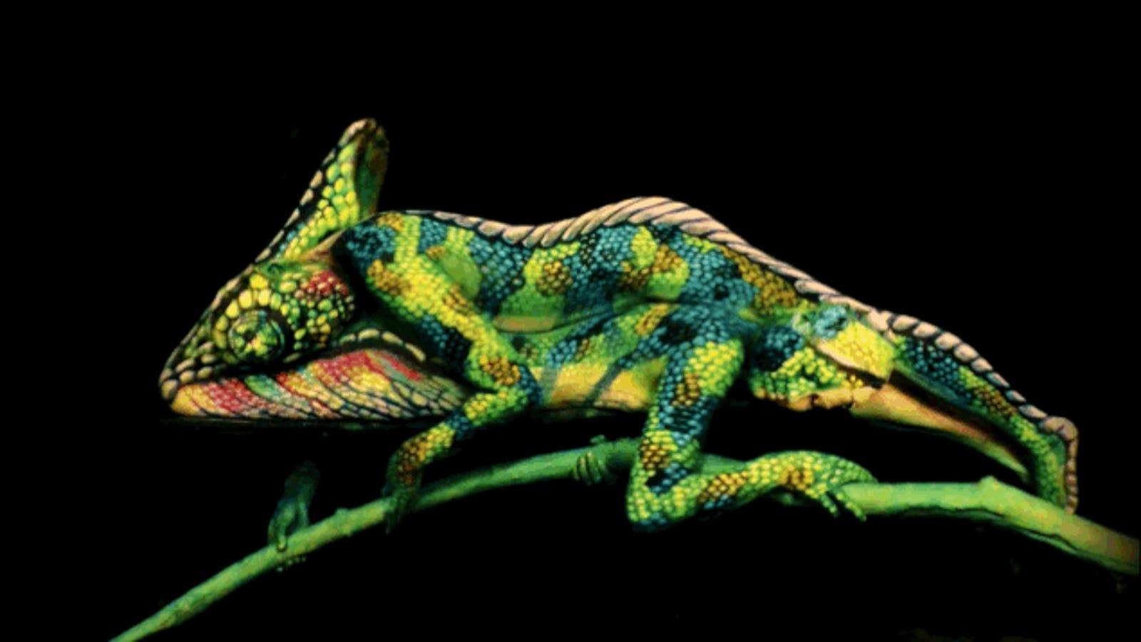 No, esta imagen no es un camaleón en movimiento