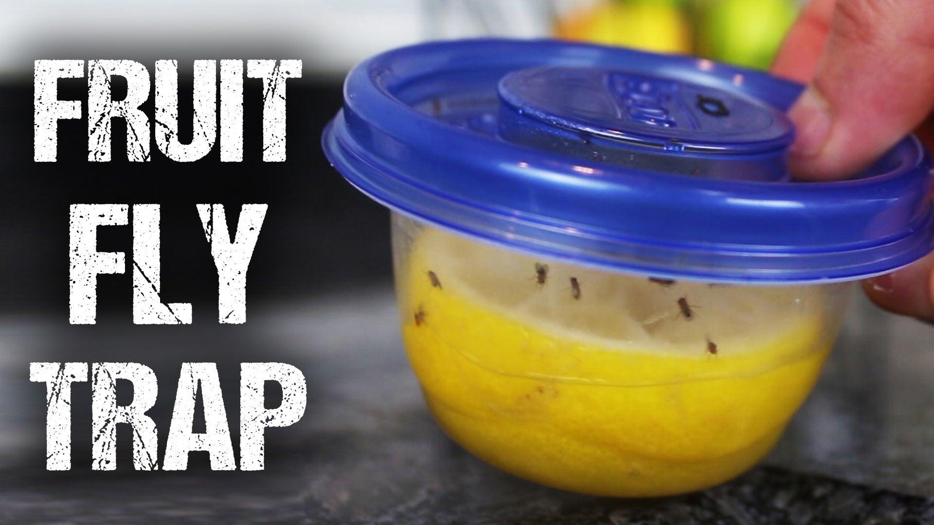 make a great smelling reusable fruit fly trap. Black Bedroom Furniture Sets. Home Design Ideas