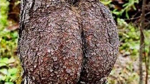 Pornhub plant a tree