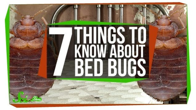 Everything you need to know about bed bugs in one video - What you need to know about trundle beds ...