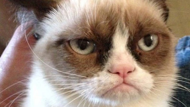 Grumpy cat gets a movie deal is still pissed grumpy cat a cat famous for having a constant look of disgust on her face and yes its 2013 and this is what fame is like in the future has been tapped thecheapjerseys Choice Image