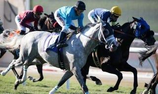 Illustration for article titled Longshots Horse Racing Tips