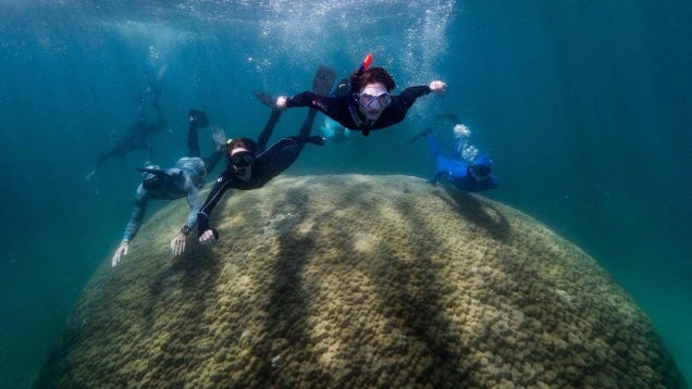 Astonishingly Large Coral Spotted in the Great Barrier Reef