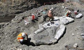 Illustration for article titled Descubren el fósil de una ballena de 4 millones de años en la cima de una montaña