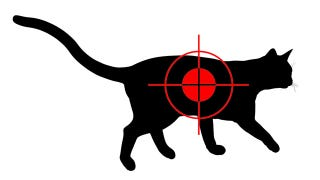 Illustration for article titled Horrible Person Kills a Democratic Campaign Manager's Cat and Scrawls 'Liberal' on Its Corpse