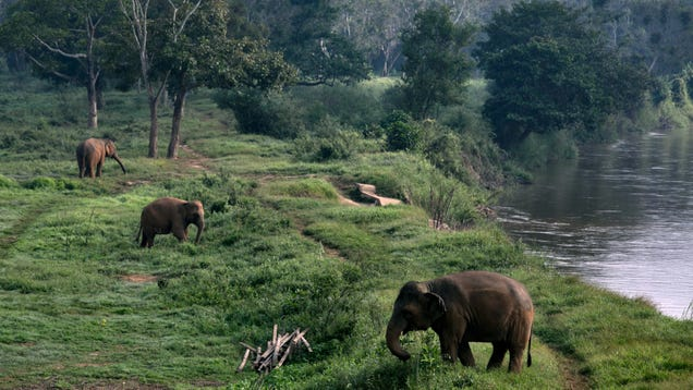 Six Elephants Die in Thailand Trying to Rescue Each Other From Waterfall