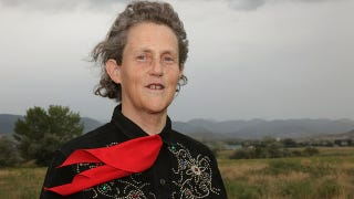 Illustration for article titled Temple Grandin has a brain like no one else's