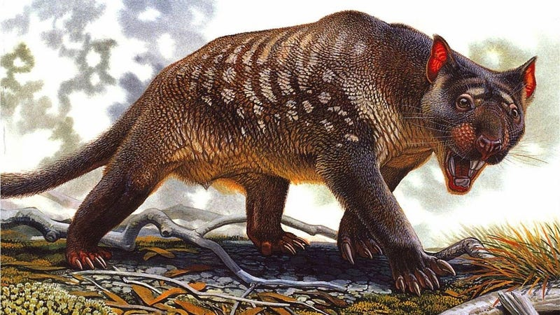 Artist's impression of Thylacoleo carnifex.