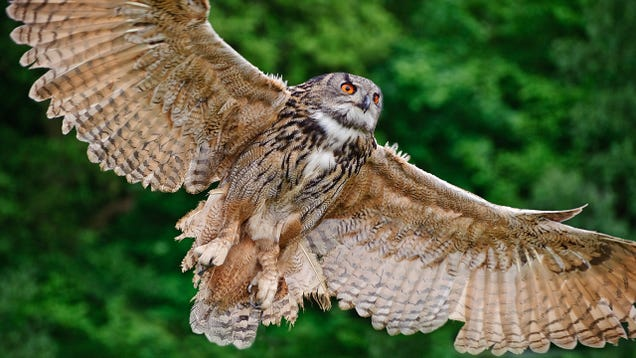 Owl Wings Are Helping Silence Airplanes, Fans, and Wind Turbines