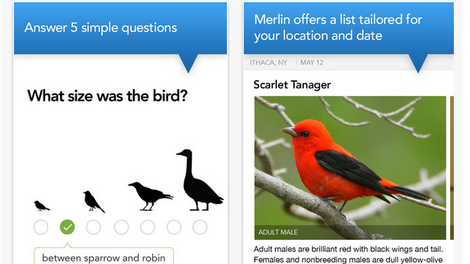 Shazam for Birds: Three Apps That Recognize Bird Calls