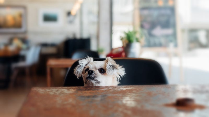 """Illustration for article titled NYC restaurant's dog menu includes $26 salmon for """"dieting"""" canines"""