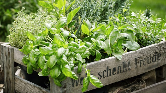 Why You Need an Herb Garden